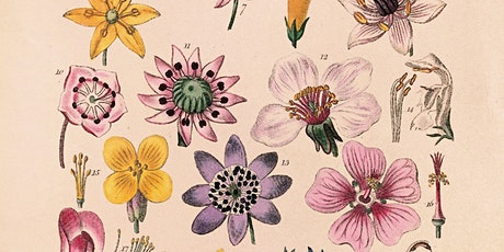 The Sexual Imagination of Botanists tickets