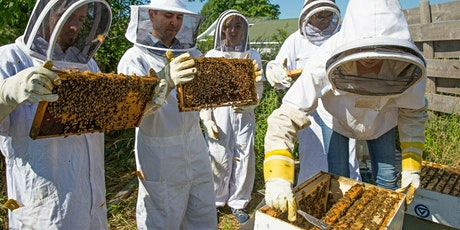 Urban Beekeeping course for Beginners 17 April tickets