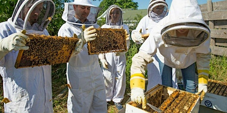 Urban Beekeeping course for Beginners 19 June tickets