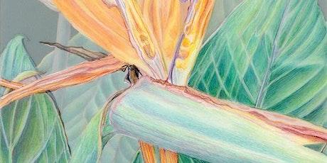 Drawing the Beauty of Plants - 6 Week Art Class (ONLINE) tickets