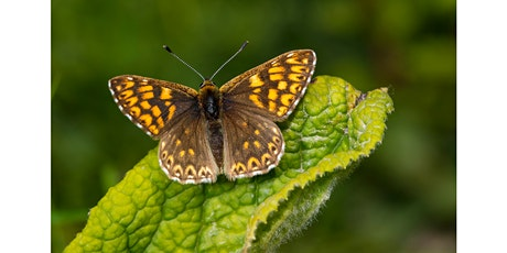 Cowslip Planting for the Duke of Burgundy Butterfly tickets