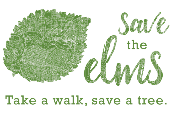 Monitoring Elms with the Save the Elms Program image