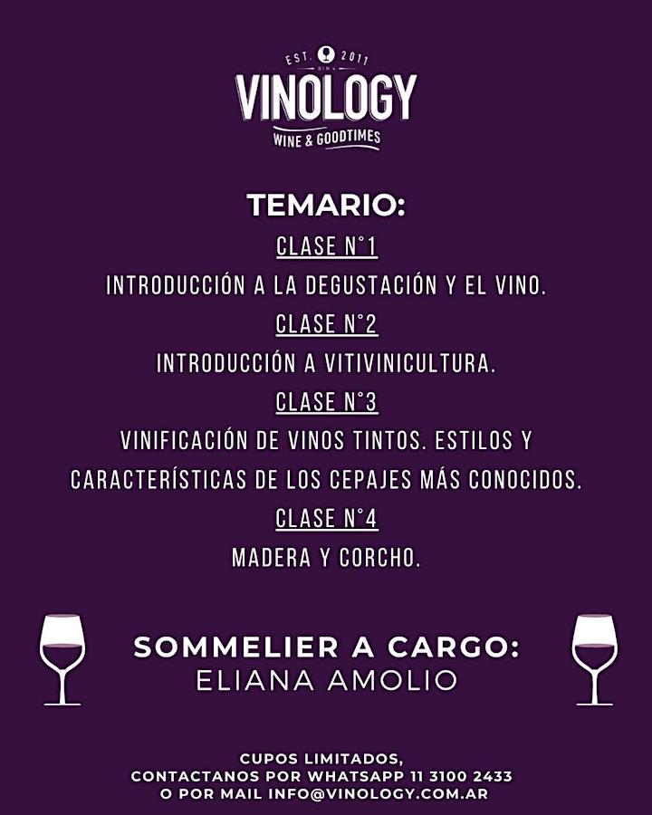 Imagen de Curso de introducción al vino en Vinology