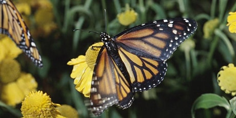Zonta Gardening Series - Attracting Pollinators tickets
