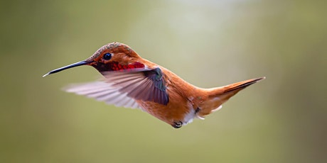 Beautiful Birds - Online Treetop Tales tickets