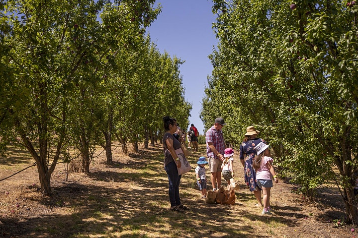 Plums On Ya Thumbs - Fruit Picking Event image
