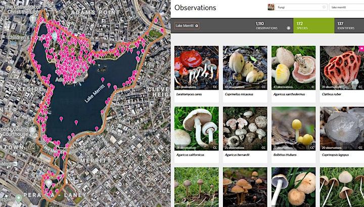 Lakeside Chat #8 - The Mushrooms of Lake Merritt with Damon Tighe image