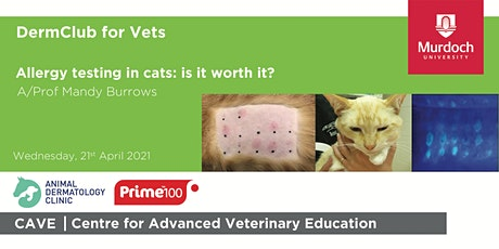 DermClub for Vets - Allergy testing in cats: is it worth it? tickets