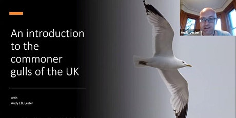 RECORDING: An introduction to Gulls of the UK - Andy Lester tickets