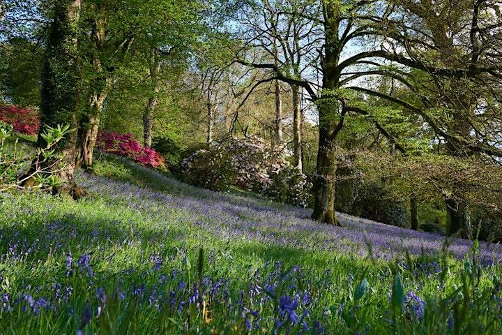 Spring Picnics at Boconnoc image