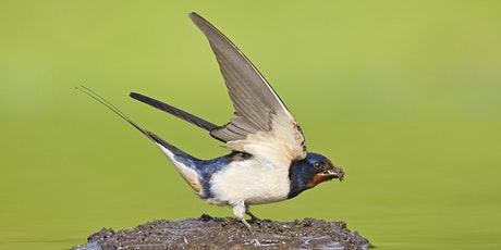 Taking Flight: Bird Identification Beyond Lockdown tickets