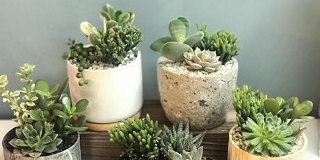 the flower shed's Succulent Planting Workshop @ Mario's Café Ambiance tickets