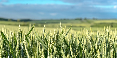 Wheat markets: where we are & what the future holds tickets