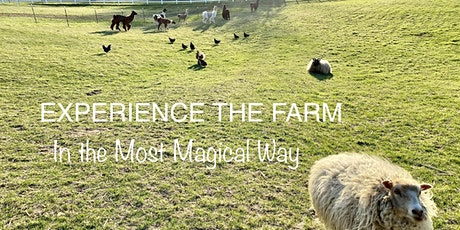 Truly unique & magical experience on the farm with LLAMAS & more! tickets