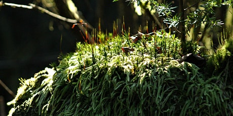 The Miniature World of Magical Mosses (Online) tickets