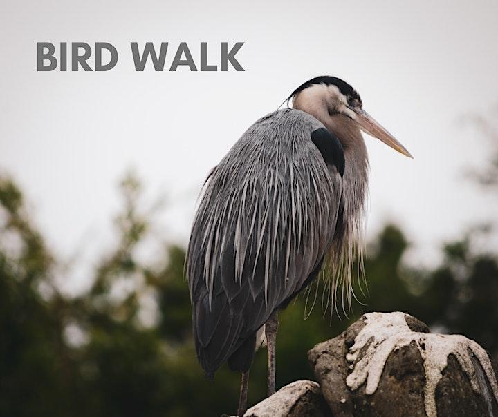Indigo Bunting Bird Walk image