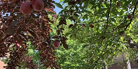 Open Orchard School: Basics of Fruit Tree Care tickets