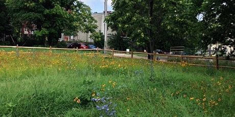 Plant Diversity and Ecosystem Services on Abandoned Urban Lands tickets