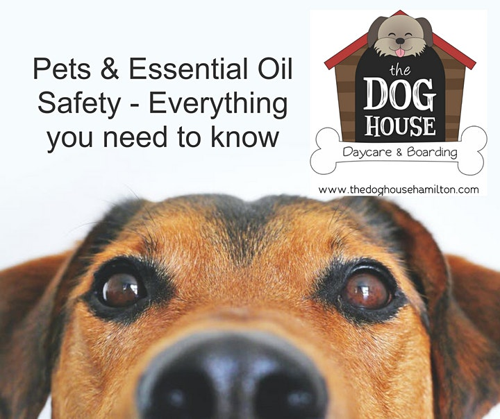 Pets & Essential Oils 101 image