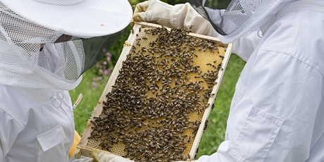 Beginner Beekeeping Bee Yard Day tickets