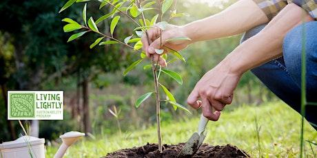 Community Tree Planting Workshop ~ Nana Glen tickets