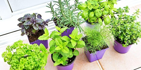 Grow Your Own Edible Garden at Home | Time of Your Life biglietti