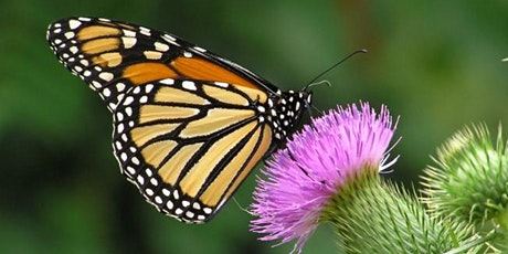 Butterfly Blitz Training Session #3: How to Conduct Timed Surveys tickets