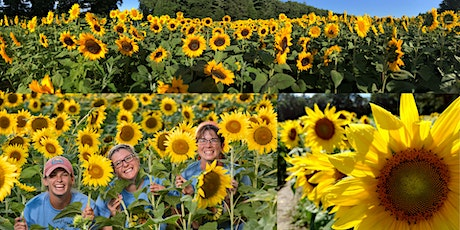 2021 Sunflower Festival - Making NH Wishes Blossom (Sat & Sun) tickets