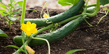 """Sustainability LIVE:  """"5 Powerful Gardening Practices You Can Use Now"""" tickets"""