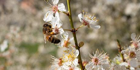 Beekeeping 101: Intro to Beekeeping tickets