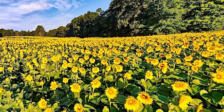 Sunrise in the Sunflowers tickets