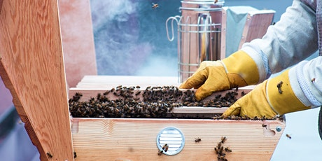 Beekeeping 103: Beehive Rescue and Honey Harvesting tickets