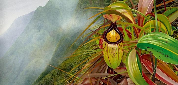 The Darker Side of Plants image