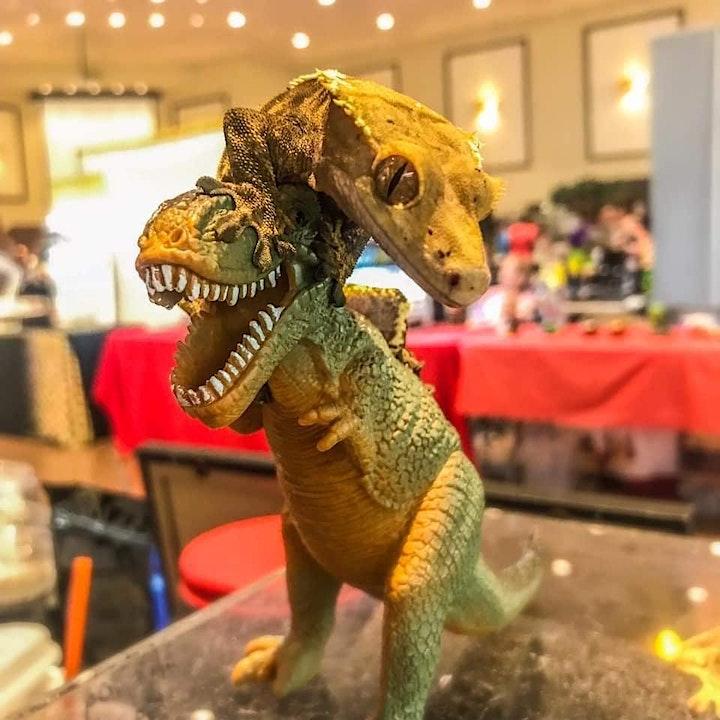Show Me Reptile & Exotics Show (New England) image