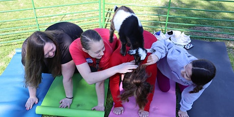 Goat Yoga Texas - Baby Goats are HERE! - Sat, May 15 @ 10am tickets