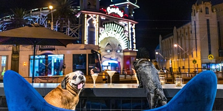 St Kilda Puppy Pub Crawl - Winter series tickets