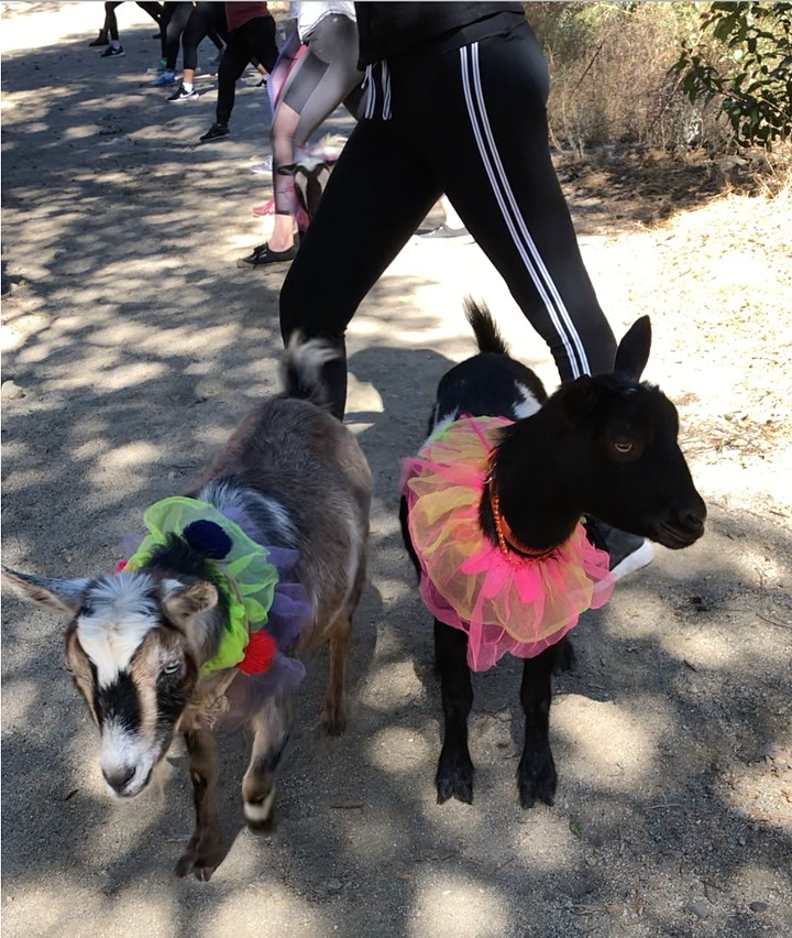 Goat Yoga Hike - SOLD OUT! image