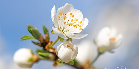 Fotoworkshop Makro-Fotografie zur Frühlingsblüte Tickets