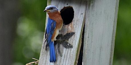 Sunday Fun Day Craft Workshop - Bluebird Houses tickets