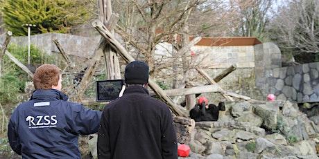 RZSS Edinburgh Science Festival - Edinburgh Zoo Virtual Tour tickets