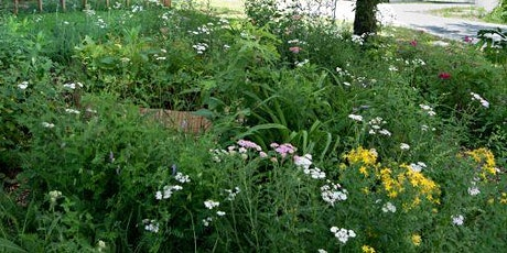 Jardiner pour les pollinisateurs avec Hecare urbain et Miel Montréal billets