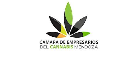 Cannabis Medicinal entradas