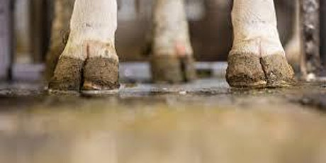 Dairy workers'training/Entrenamiento para trabajadores lecheros boletos