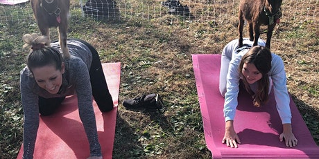 Sunset Goat Yoga at Lucky Dog Farm - Wentzville, MO tickets
