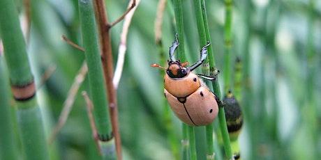 Taller de Insectos con Queens Botanical Garden entradas