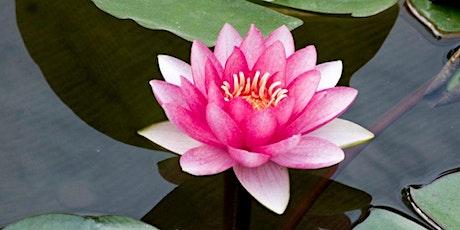 SY Meditation-Learn an effortless meditation technique tickets