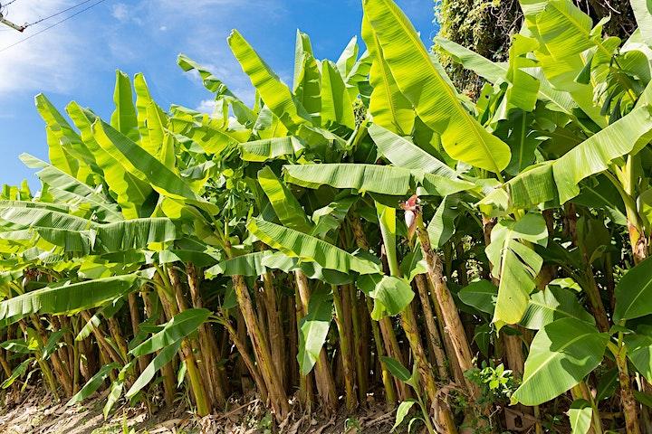 (Annual Sinton Lecture) Ryukyu Bashofu: Banana Fiber Textiles of Okinawa image