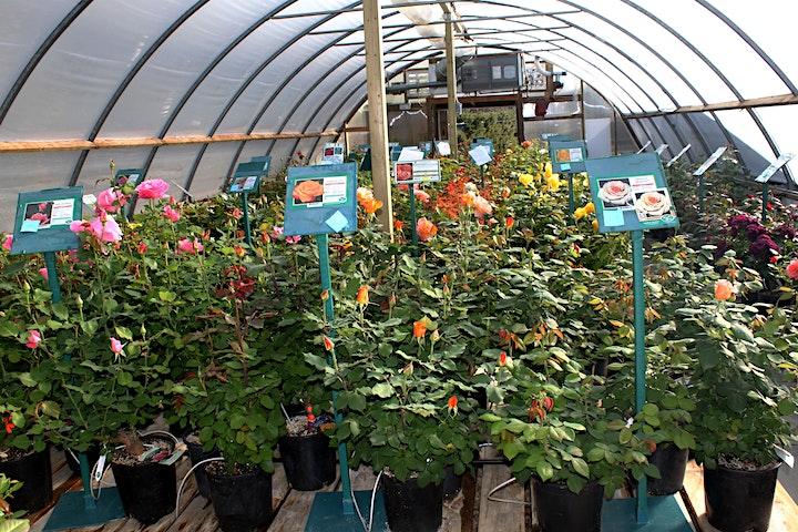 St. Albert Botanic Park Rose Sale & Gift Shop Opening image