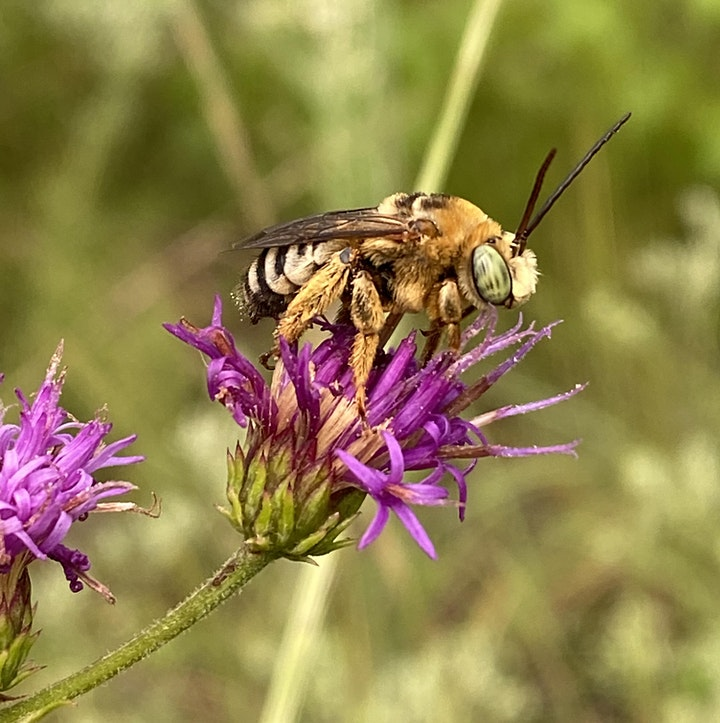 Bees and Fire: Do they Mix? image