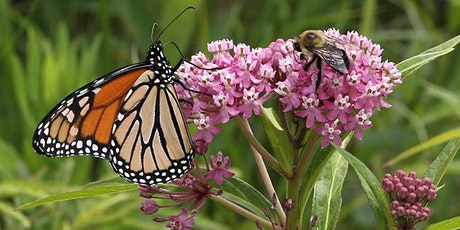 Creating High-Quality Habitat for Iowa's Pollinators and Wildlife tickets